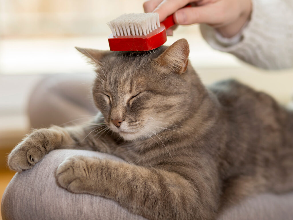 Caring For Cats — Tips And Tricks To Do So – Side Slow